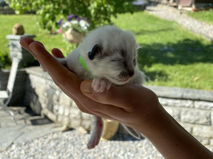 Baby grün 1 ½ Wochen alt