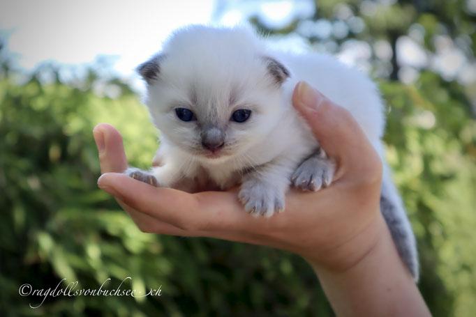 Baby beige