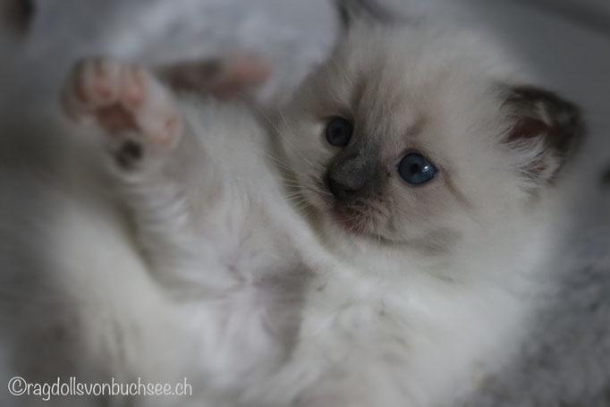 Baby hellblau