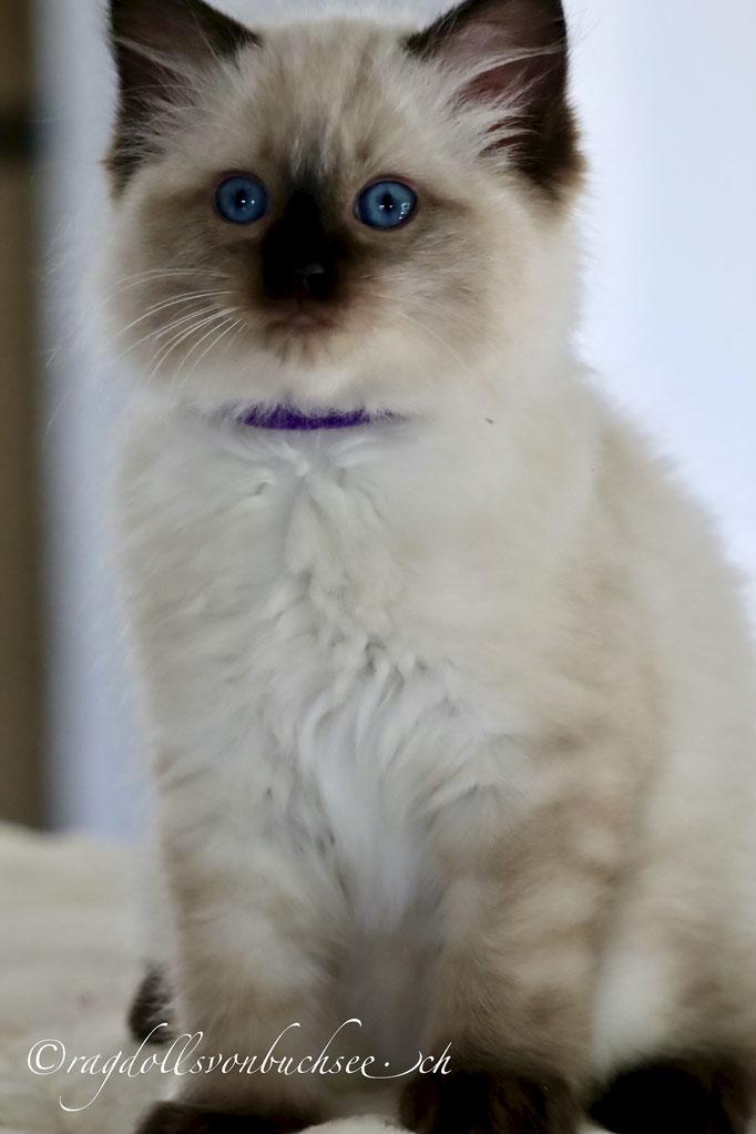 Baby violett