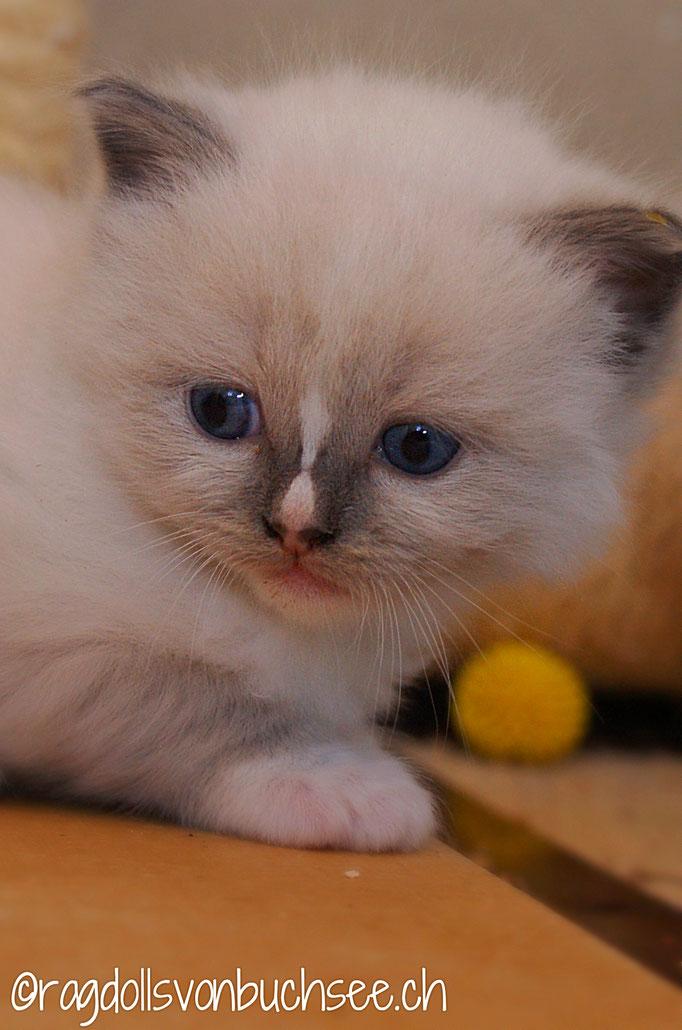 Baby gelb