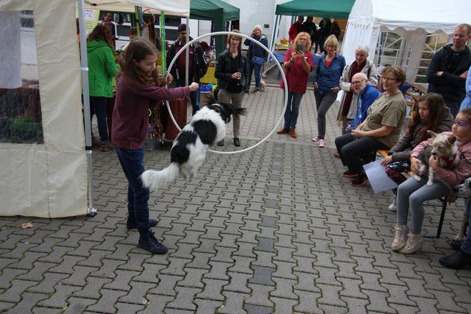 Zauberei mit dem Hund