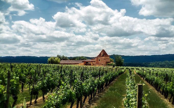 Wijngaarden in de Cahors streek