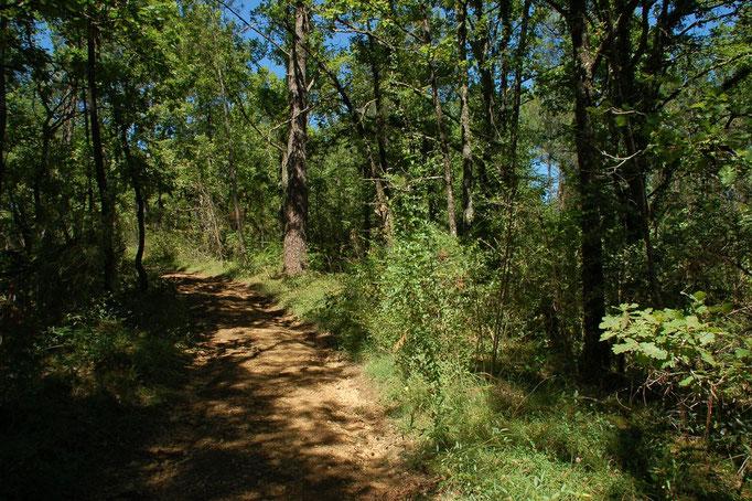 Een eindje verderop lopen wandelpaden het bos in.