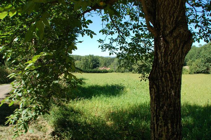Achter en voor het huis, bos.  Naast het huis, akkerland.