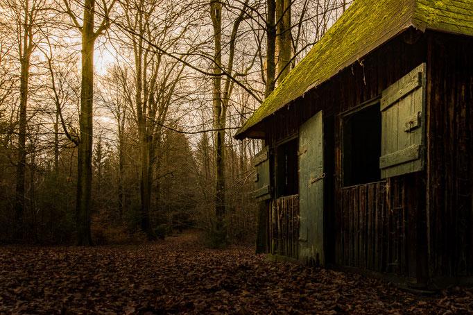 Eine einsame Hütte im Wald