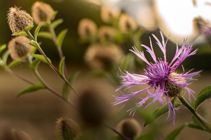 Nahaufnahme einer Blüte