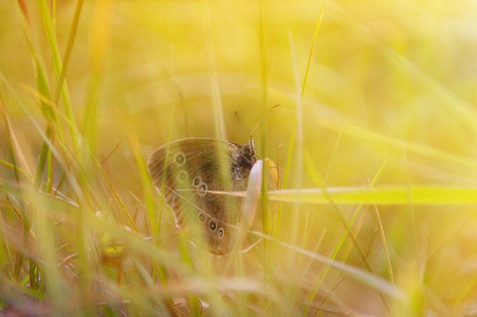 Ein Schmetterling im Gras