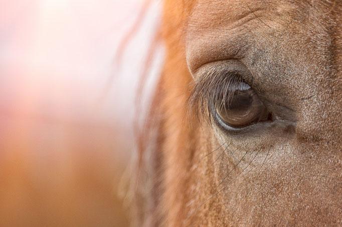 Nahansicht eines Pferdeauges