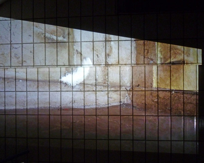 Karin Meinel, raum 2 feder, Video Still (Foto: Paetzold)