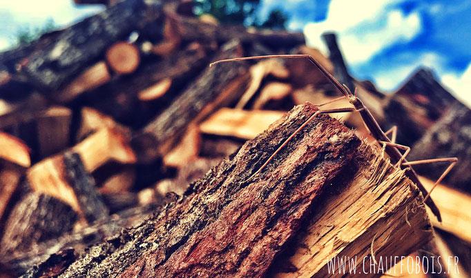 livraison bois sec Angers 49