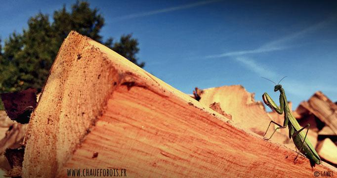 granulé de bois angers 49