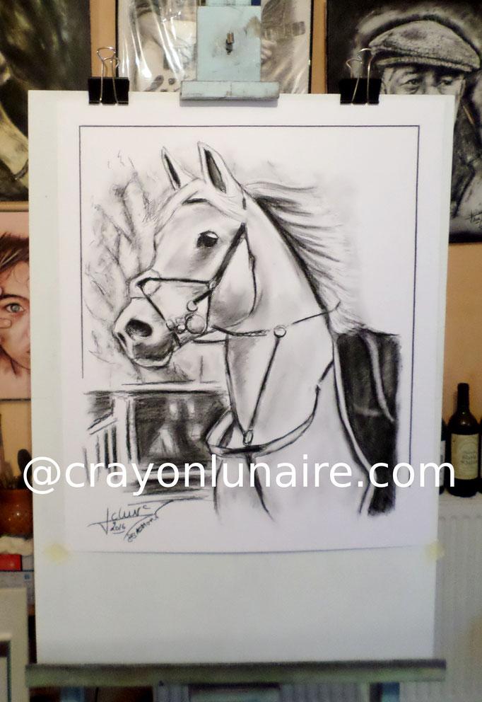 Portrait d'apres photo cheval blanc Fusain sur papier blanc