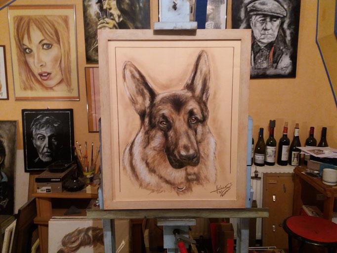 Portrait-animalier-chien-berger-allemand