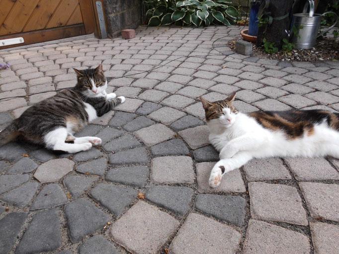 Eddy und Willy, Zusammenführung