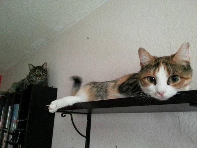 Lilja und Bert, Wiederzusammenführung