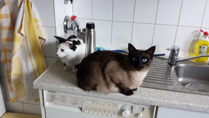 Sammy und Humpty, Beratung wg. Zweitkatze