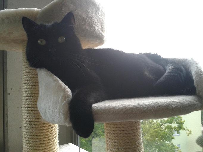 Nora, Aggressionen gegen Katzensitter