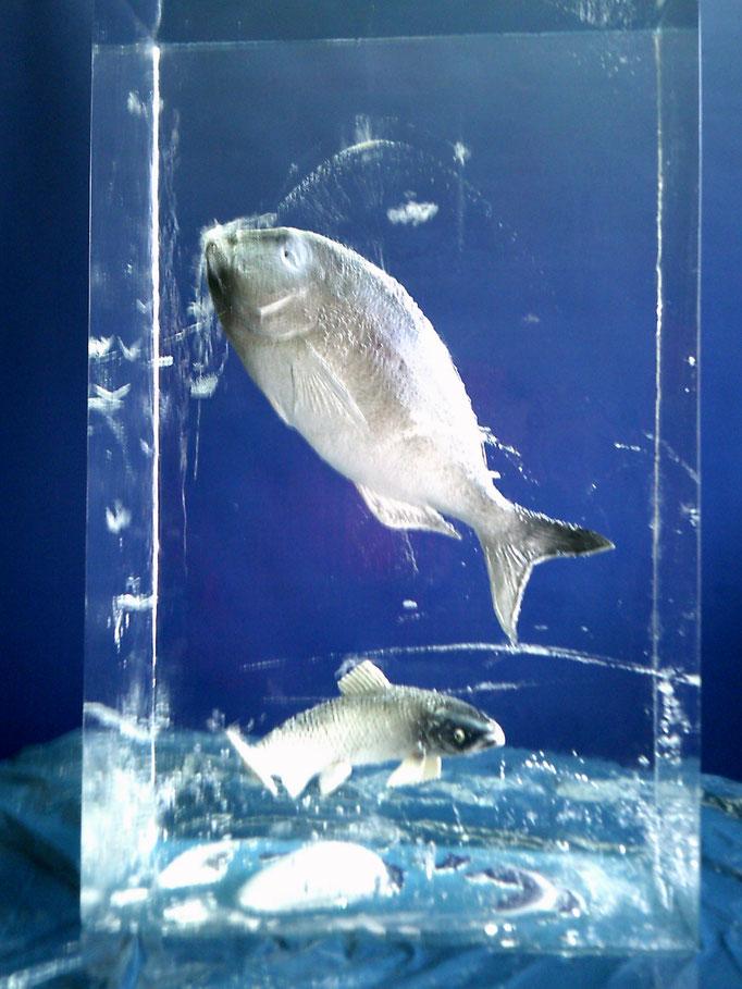 Einfrierung : Eisblock mit Fischen