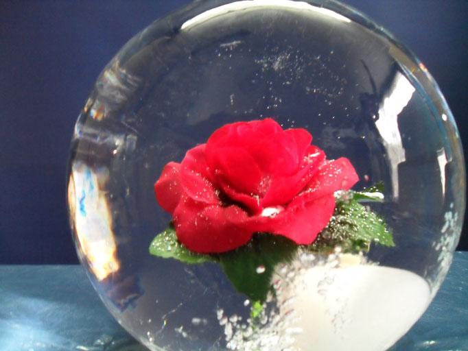 Einfrierung :Rose in Eiskugel