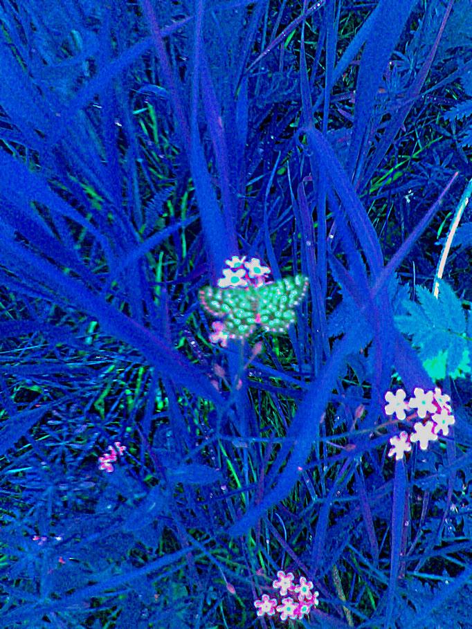Schmetterling + farfalla + butterfly