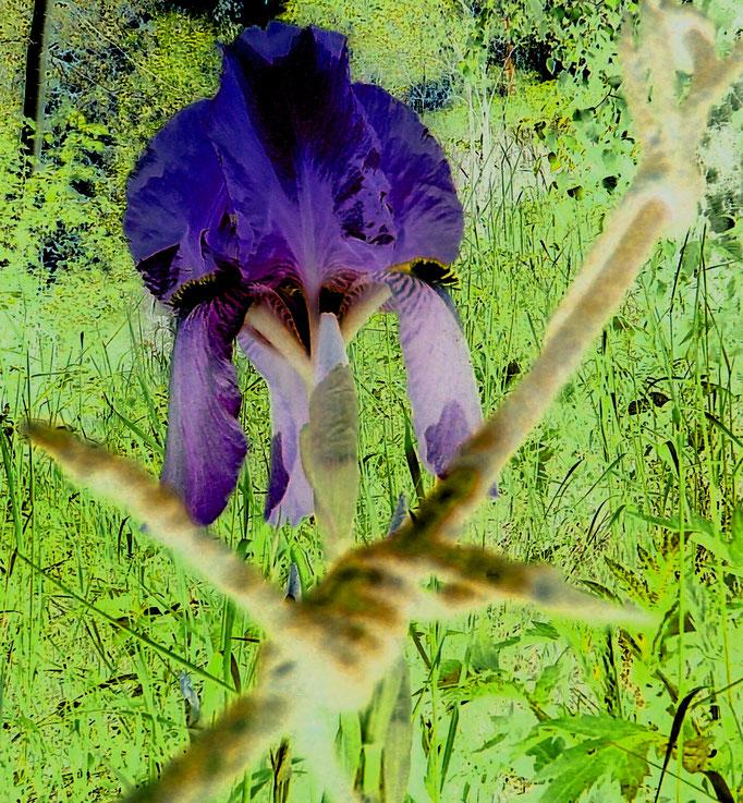 Draht Blume + Fiore al fil di ferro + wire flower