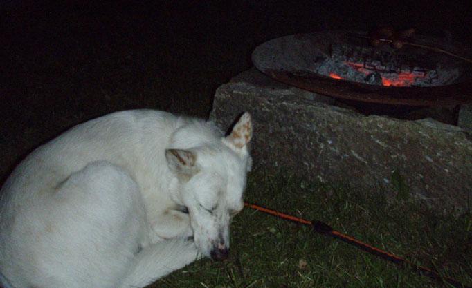 schlafende Greta - Sommer Urlaub Südtirol mit Hund - summer holiday south tyrol - vacanze estate Trentino Alto Adige con cane