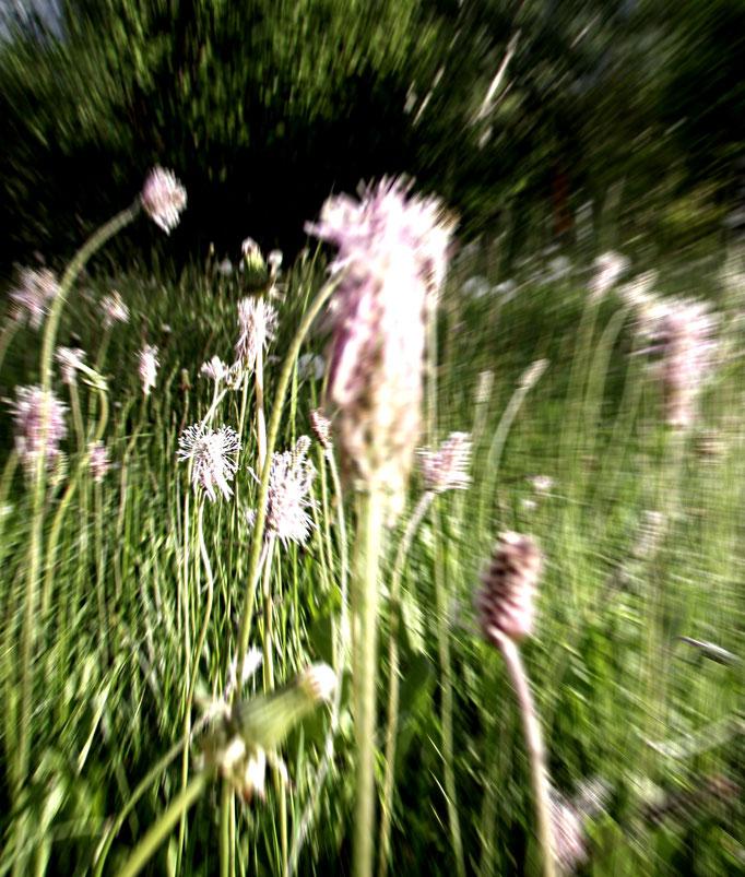 magic garden + giardino magico + magischer Garten