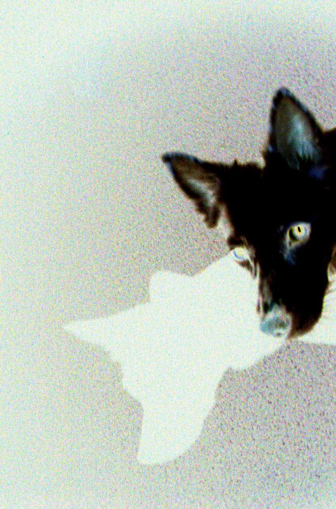 weißer Hund im Dunkel - cane bianco al buio