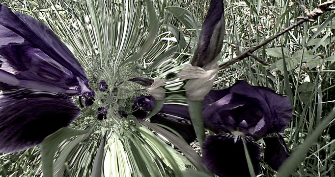 Stacheldrahtblumen + barbed wire flowers + fiori allo filo spinato