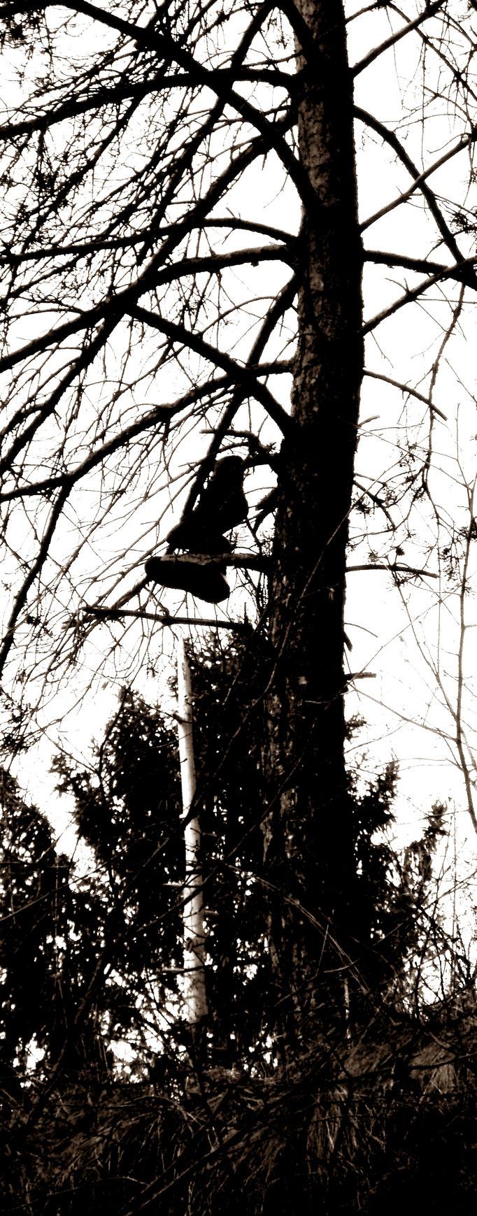Schuhe Olang im Baum - scarpe - shoes