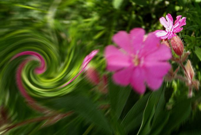 Klucklucks Blume + fiore del kluxklux flower