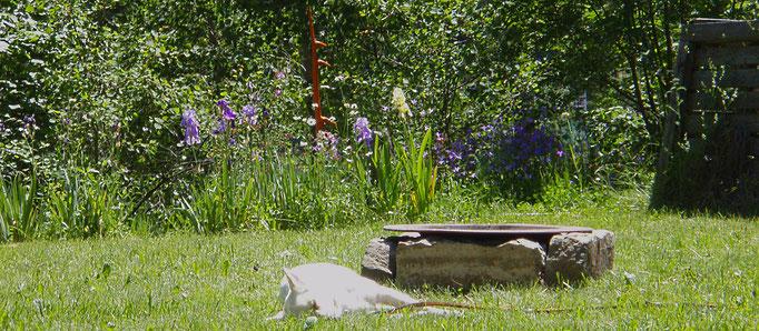 Greta nackt beim schlafen im Garten der Lust - dorme nuda nel giardino dei desideri - sleeping naked in the garden of desire