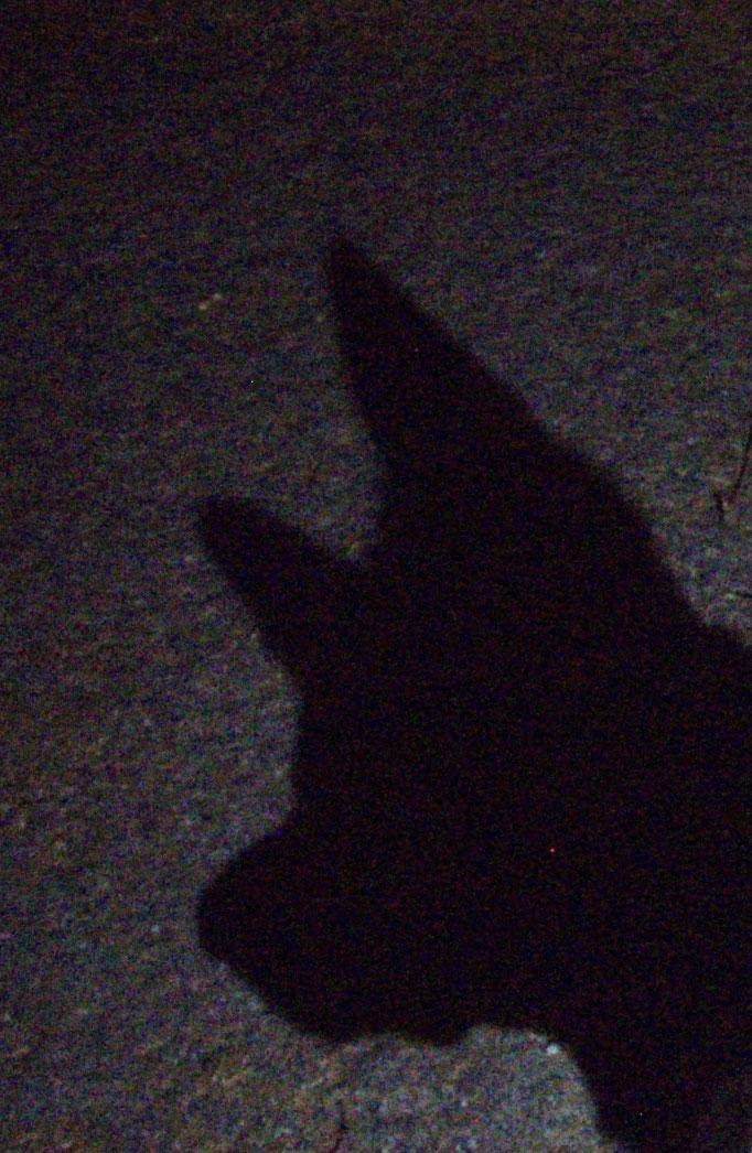 Schatten - ombra - shadow
