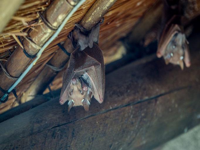 Ein Bild von Fledermäusen entstanden beim Dachausbau durch die 3B Denkmalpflege & Bausanierung GmbH