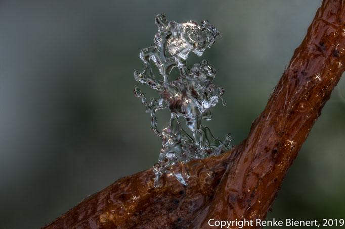 Eiskristall (21 Einzelbilder, Laowa 2,5:1)