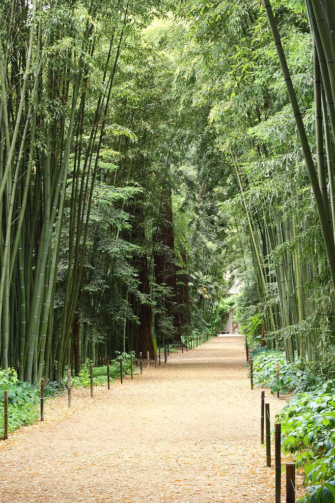 Bambouseraie d'Anduze allée et jardin fleuri