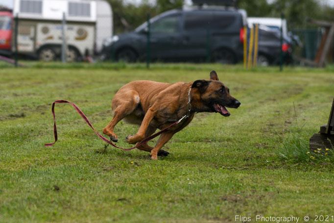 Hundesporttreffen43