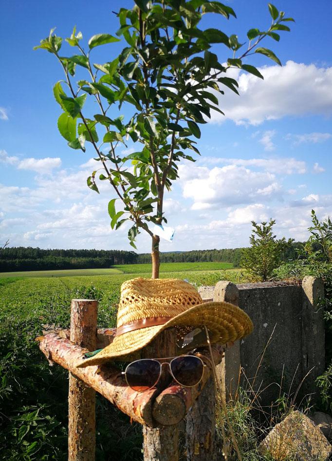 Einer von 7 Obstbäumen direkt am Turm - Apfelspaß von Andy Hertel