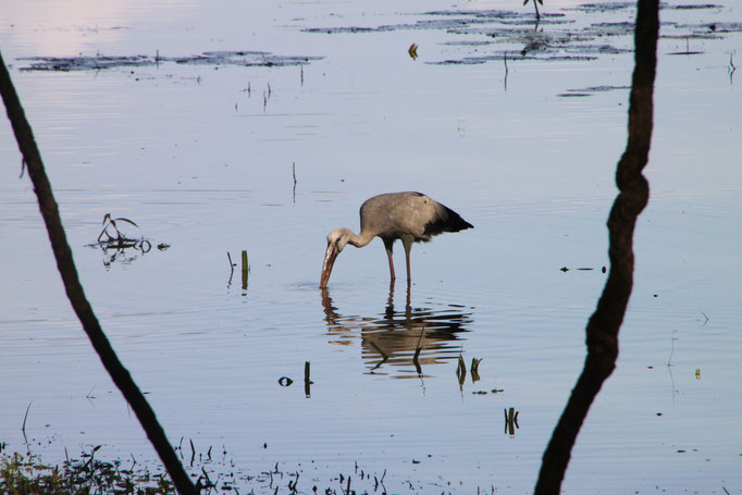 Lac à KANDY