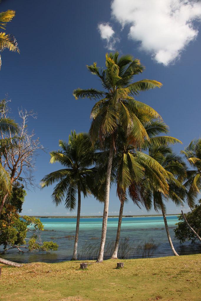 Près de la lagune de BACALAR près de la frontière du BELIZE.