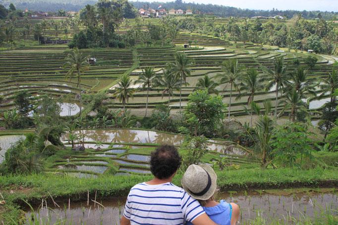 Dans les rizières en terrasse. BALI.