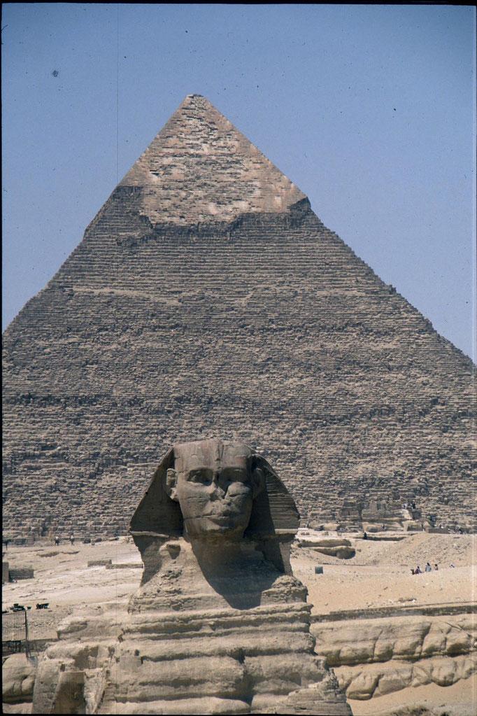Le Sphinx, gardien du complexe des pyramides.