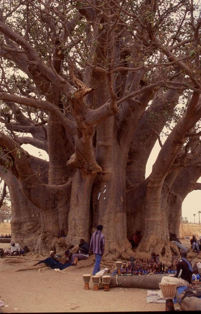 Baobab sacré de 32m de diamètre près de JOAL.