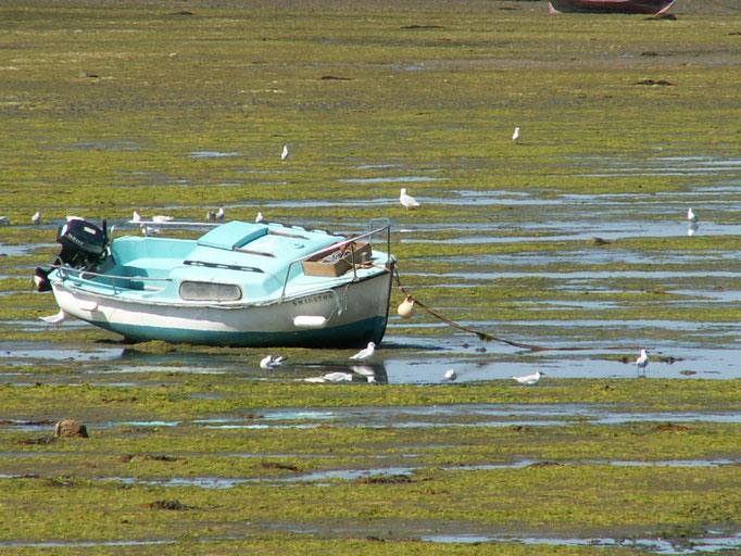 Marée basse à Morbihan. FRANCE