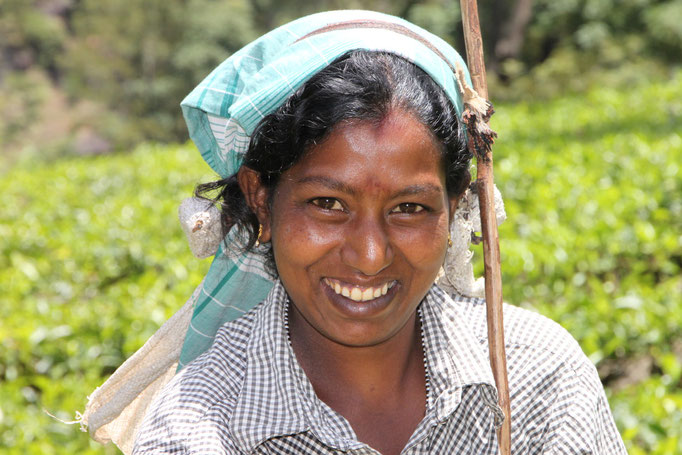 Ramasseuse de thé TAMOUL à NUWALA ELIYA.