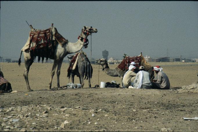 Ballade en chameau sur le plateau de GIZA.