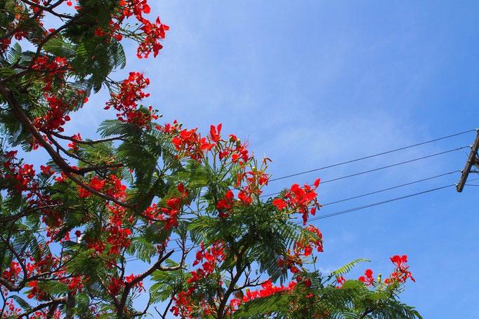 暑いところでは色鮮やかな花がお似合い