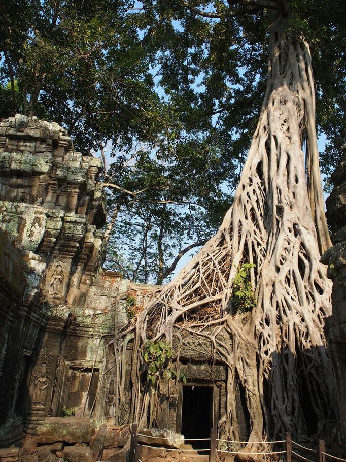 タプロームは 木々の力強さをまじまじと感じる そんな場所でした