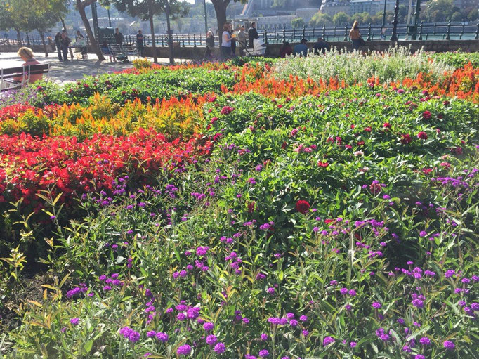 ドナウ川沿いには路面電車が走っていたり お花がたくさん寄せ植えされていたりしてのんびりな雰囲気